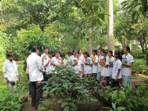 Herbal garden 4-299x225